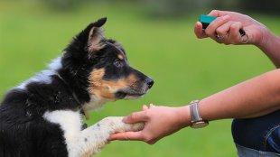 Hogyan tanítsuk meg kutyusunknak a klikker alapjait?