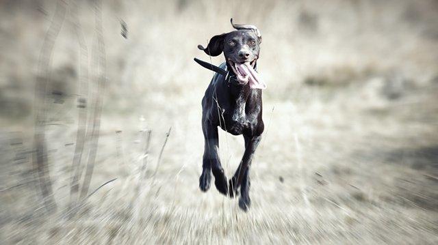 Mit tegyünk a szökős kutyákkal?