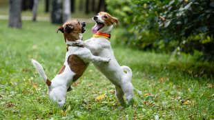 Kivel engedjük barátkozni kutyusunkat?