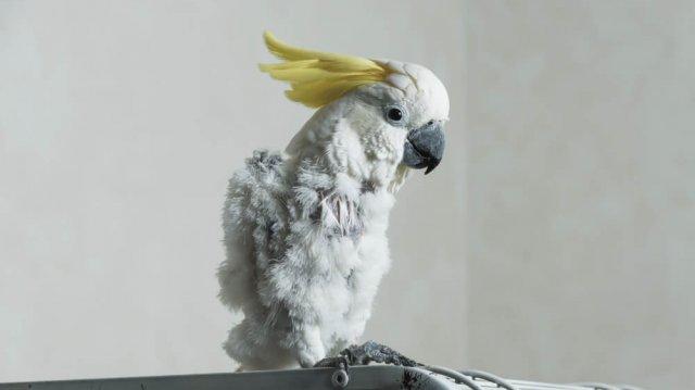 Beteg a madaram?