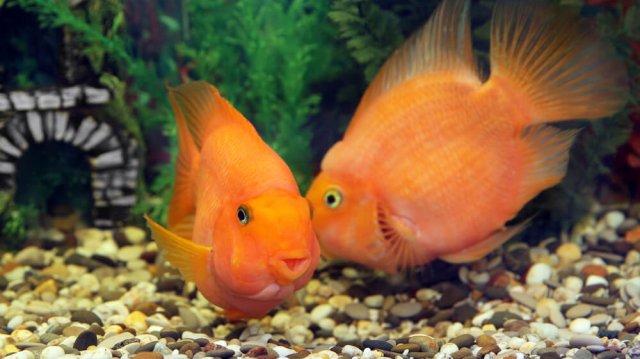 Társas akvárium: mire figyeljünk