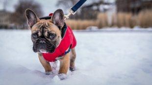 Kutyasétáltatás hidegben