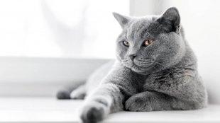 Macskatartás kis lakásban