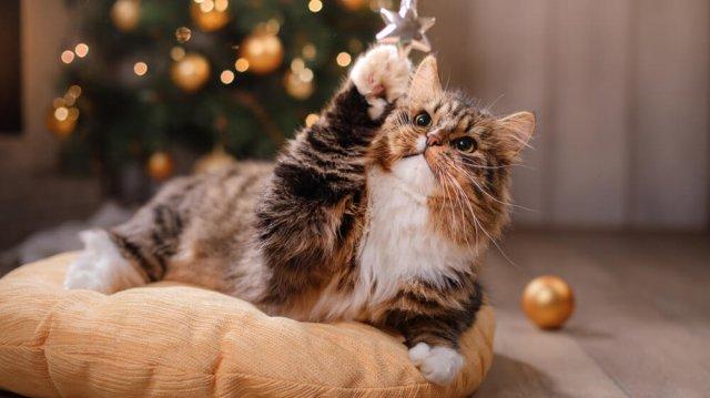 Macska és a karácsonyfa