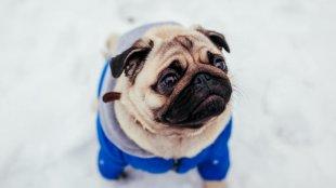 Téli kutyadivat