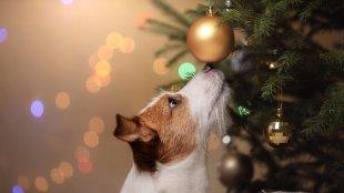 A karácsony veszélyei a kutyákra