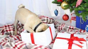 Boldog karácsonyt! Lepjük meg kedvenceinket is az ünnepek alkalmából!