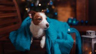 Boldog új évet! Könnyítsük meg a szilveszter éjszakát kutyáink számára