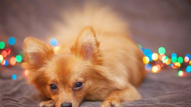 Szilveszteri tűzijáték – így segíthet kutyusának