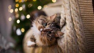 Hasznos újévi fogadalmak cicagazdiknak