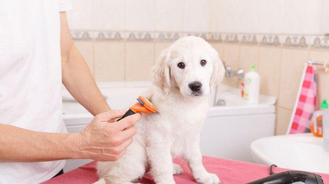 Kutyawellness – karom-, és szőrápolás