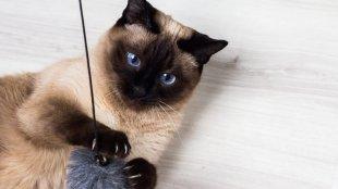 Játékötletek a hideg időre cicáknak