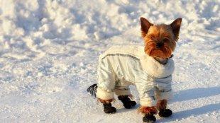 Kutyacipő – hasznos-e valójában?