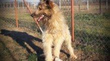 Játékos kutyusunk, Kugli szerető gazdira vár!!!