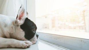 Mit tegyünk, ha kutyusunk szeparációs stresszel küzd?