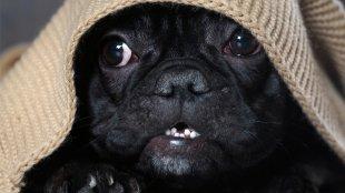 Hogyan segítsük kutyusunkat Szilveszterkor?