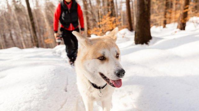 Téli kirándulás kutyával? –Túrázz kedvenceddel!