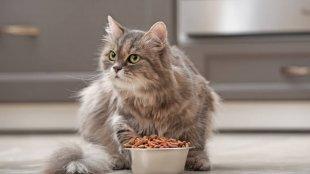 Ételérzékeny cica? – Etetési tippek cicagazdiknak