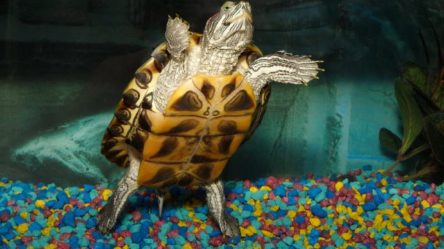 Teknős kisokos