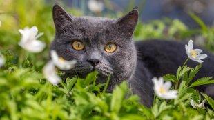 Felkészülés a tavaszra – ezt szerezd be cicád számára