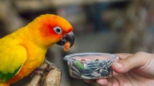 Házi finomságok tollas barátodnak