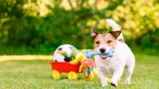 Kerti játékötletek kutyáknak