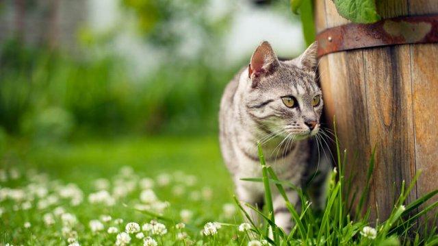 Játssz a kertben cicáddal!