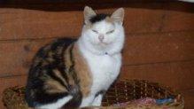 Cicke a grimaszoló macska