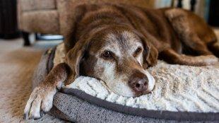 Csípőproblémák kutyáknál – így előzd meg a kialakulásukat!