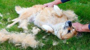 Bundaápolási tippek a melegre kutyagazdiknak