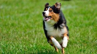 Így kötheti le nagy mozgásigényű kutyáját