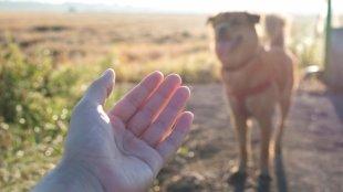 Hogyan legyen atom biztos behívása kutyusunknak?