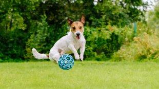 Hogyan tegyük játékosabbá kutyusunkat?