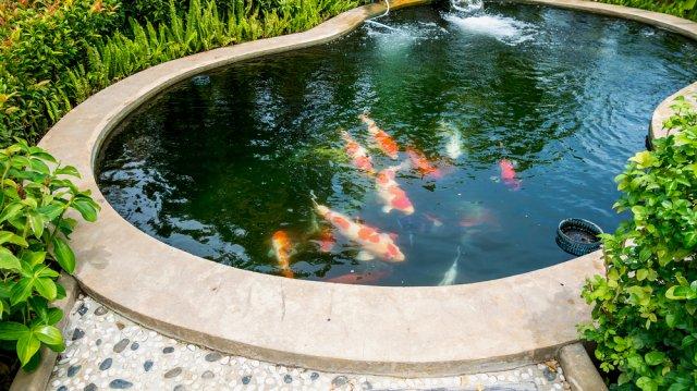 Kerti tó karbantartási tippek a nyárra