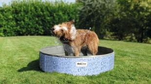 Fürdetési útmutató kutyákhoz