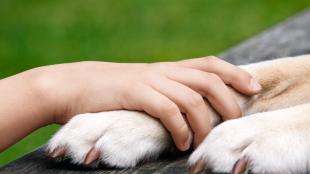 Így védd meg kutyád tappancsait a forró betonon