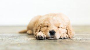 Hogyan tanítsuk meg kutyusunknak, hogy nyugodtan várakozzon, ha a vendégek elől el kell zárni?