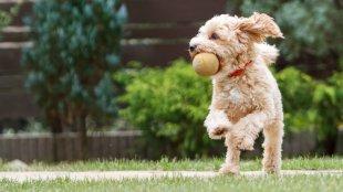 Készségfejlesztő játékok kutyusoknak