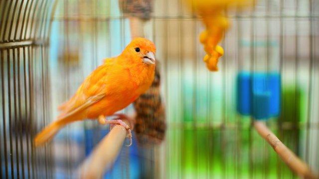 Immunerősítő tippek madárgazdiknak