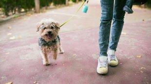 A kutyasétáltatás 4 aranyszabálya