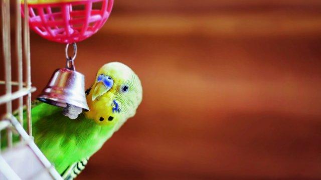 Kisgyerekek és kismadarak: mire figyeljünk?
