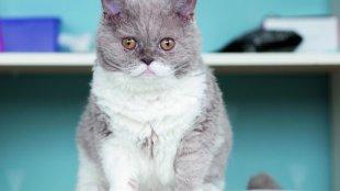 Mire figyeljen idős cicájánál