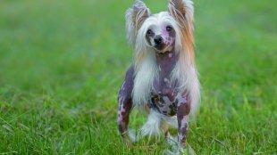 Első látogatás a kutyakozmetikusnál – összegyűjtöttük mire érdemes figyelni!