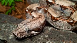 Kígyó, mint házikedvenc? Segítünk a választásban