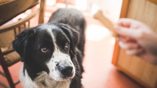 Tiltólistás ételek, mit ne adjunk kutyusunknak