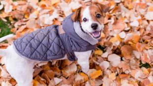 Mire érdemes figyelni a kutyafuttató használatakor?