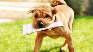 Kutyatrükkök, melyekkel fejleszthetjük négylábú kedvencünket