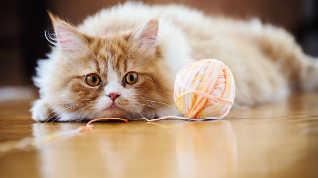 Funkcionális játékok cicáknak