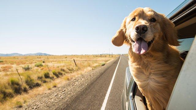 Hogyan kezdjünk bele az autózásba kutyusunkkal?