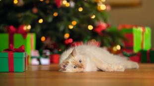 Hogyan tehetjük macskabiztossá a karácsonyi dekorációt?